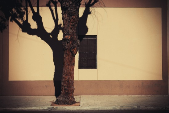 Brownish Wall and Tree